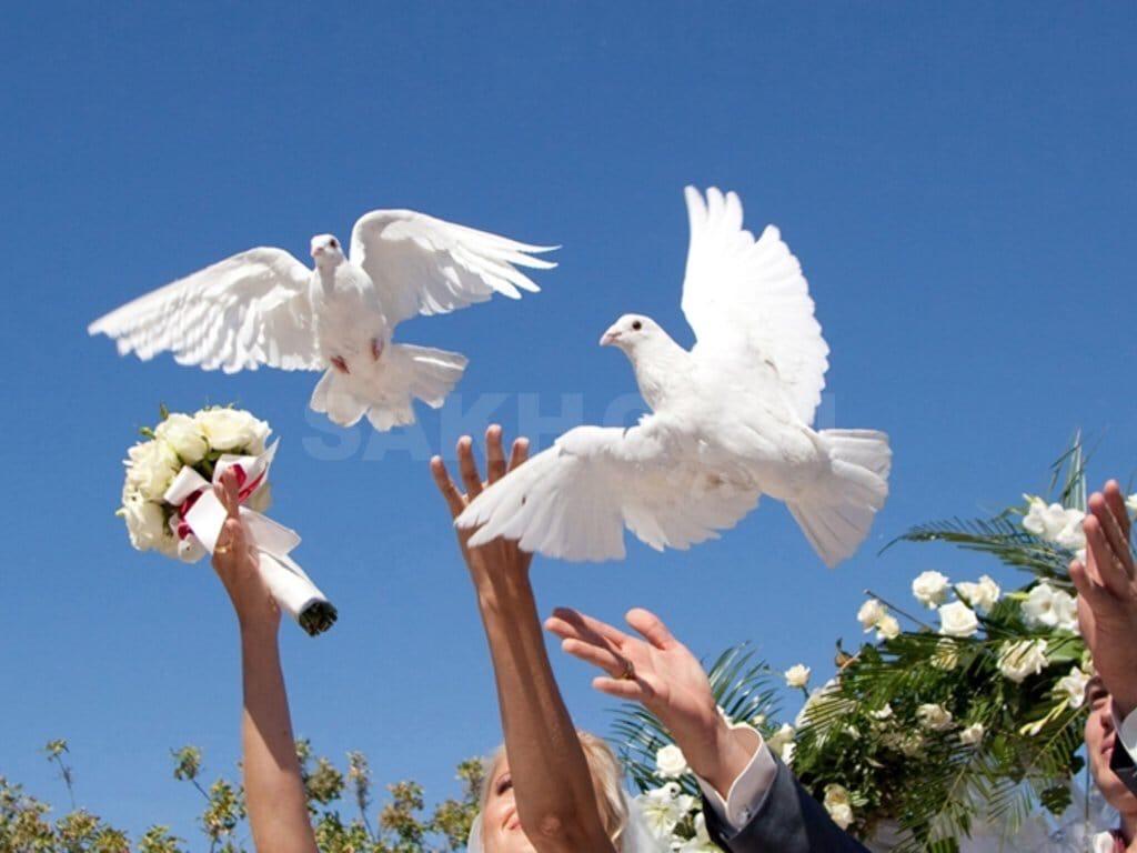пожалуйста, очень голуби разводимые во франции картинки славу можно