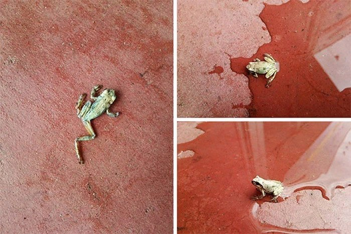 Природа не знает жалости! 13 картин, от которых по спине побегут мурашки, изображение №13