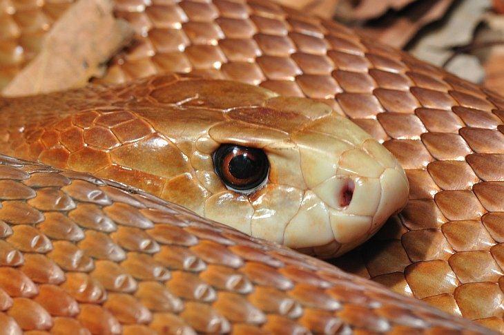 10 самых опасных животных ядов на земле, изображение №10