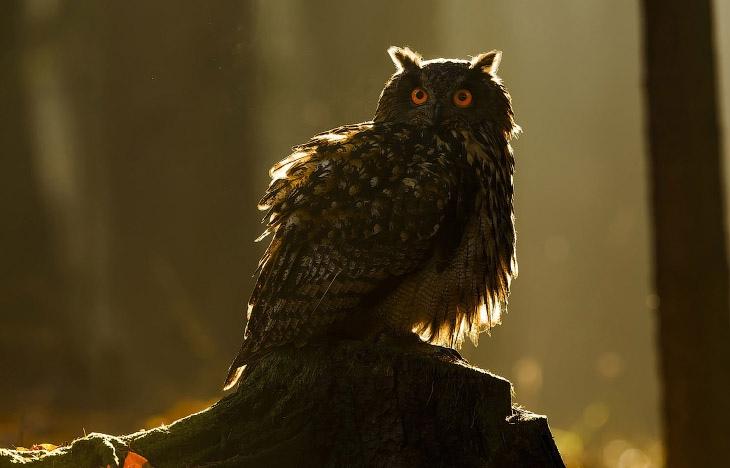 Супер совы, изображение №2