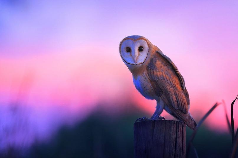 Супер совы, изображение №18