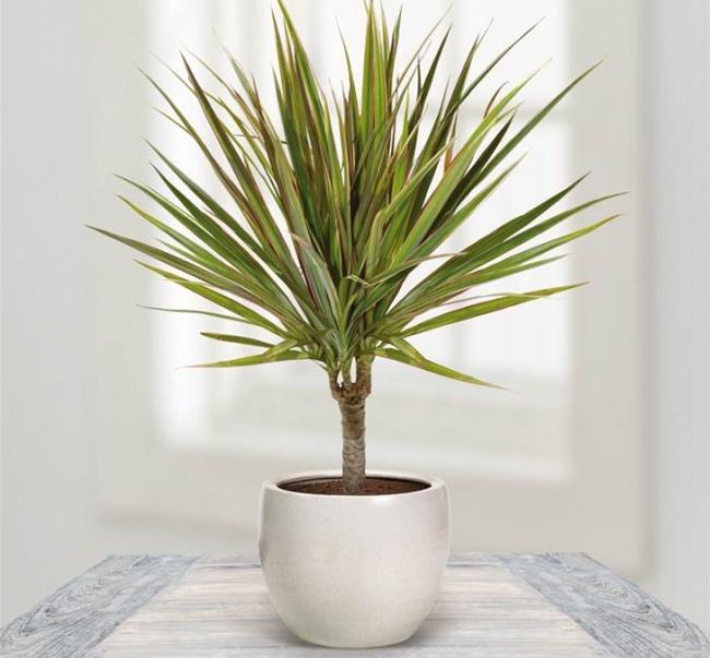 Домашние растения, которые могут выжить даже в самом темном углу, изображение №3